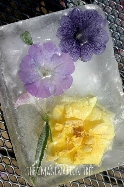 Frozen flowers in ice science experiment