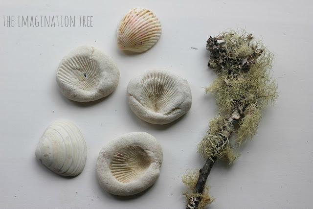 Salt dough shell fossils