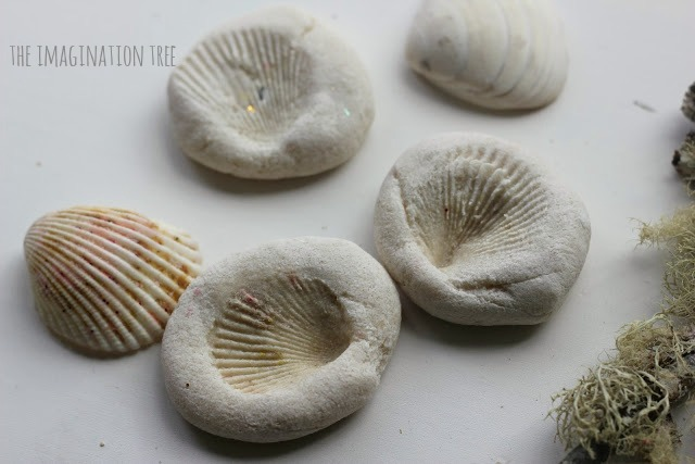 Shell imprint fossils