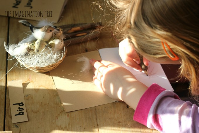 Drawing a nest in a nature journal