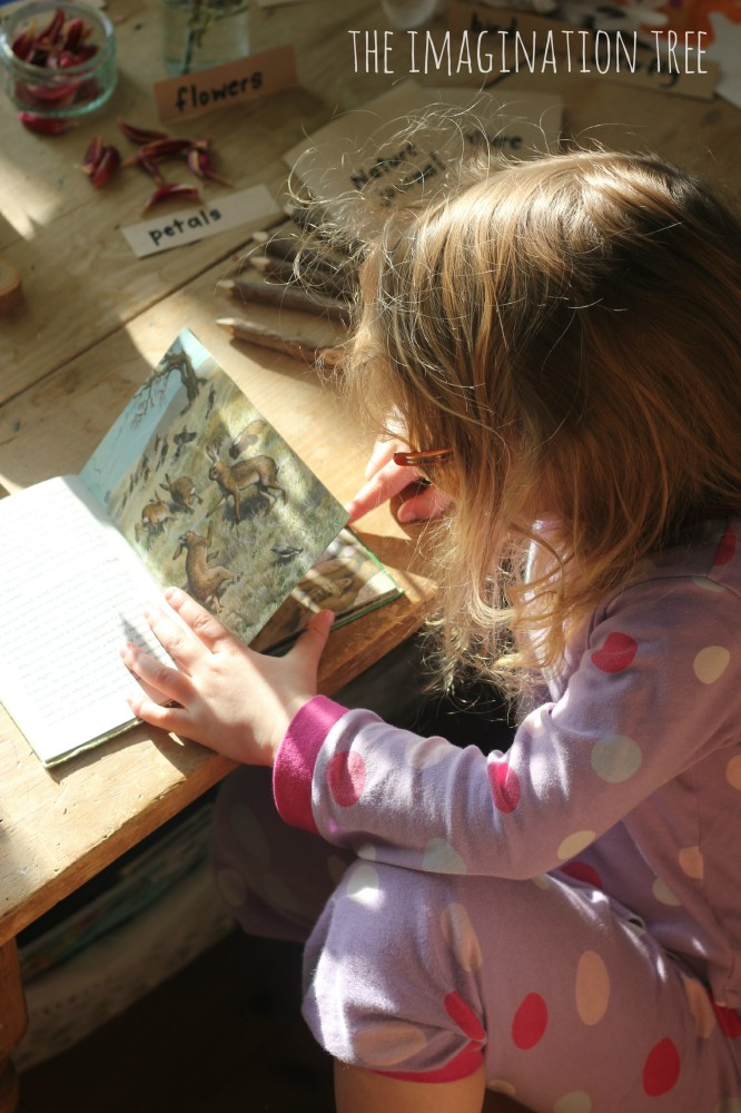 Reading a spring  nature book