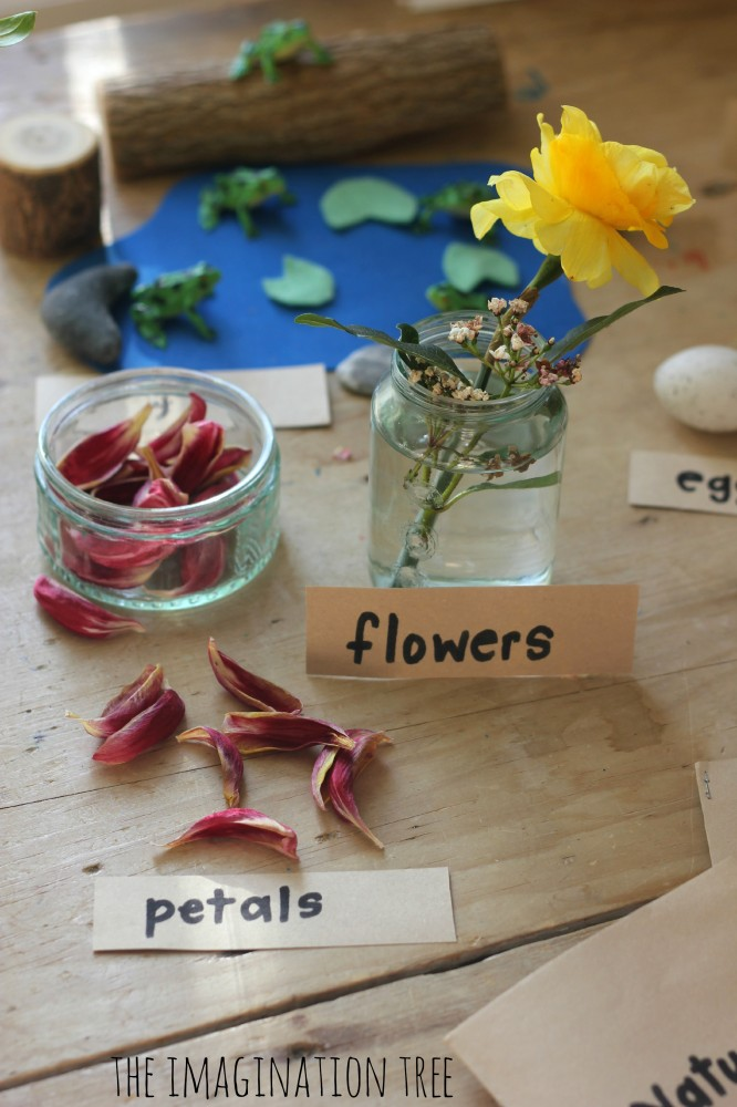 flowers and petals on the nature table