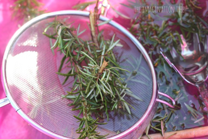 Sieving and scooping rosemary in water