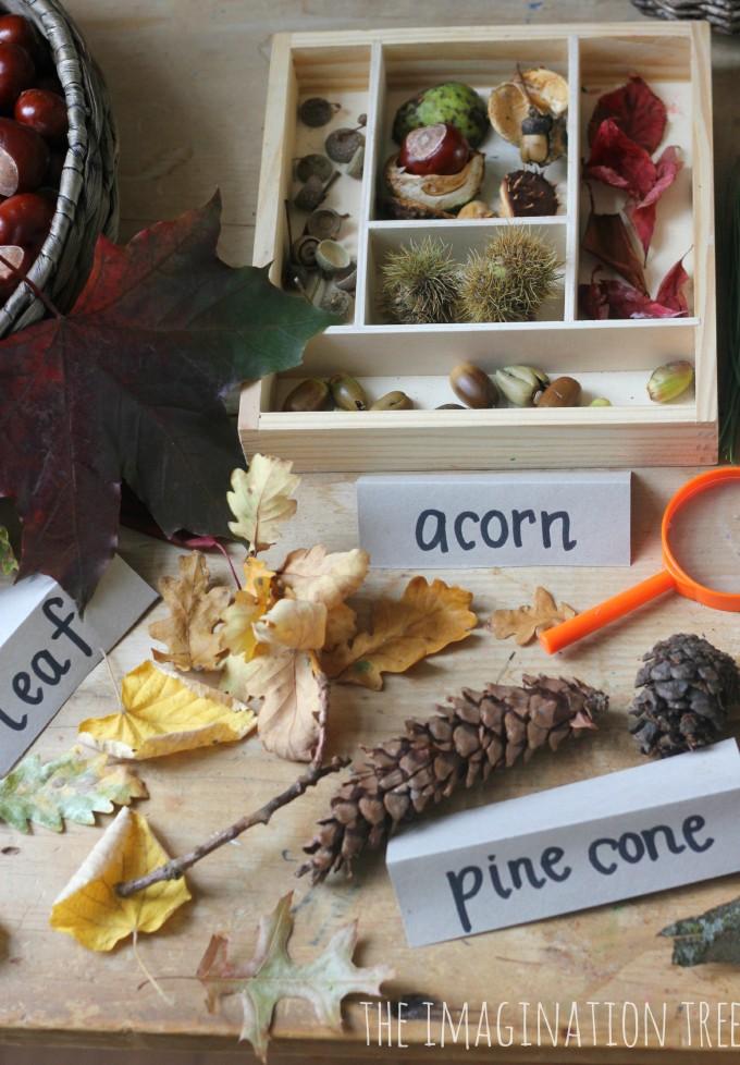 Autumn Exploration Table