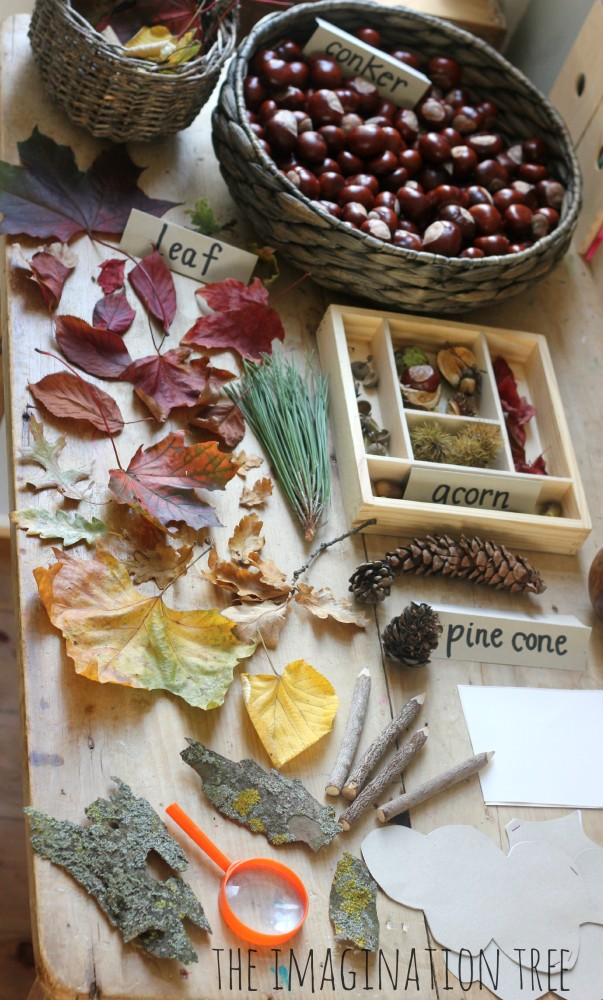 Nature exploration table for Autumn