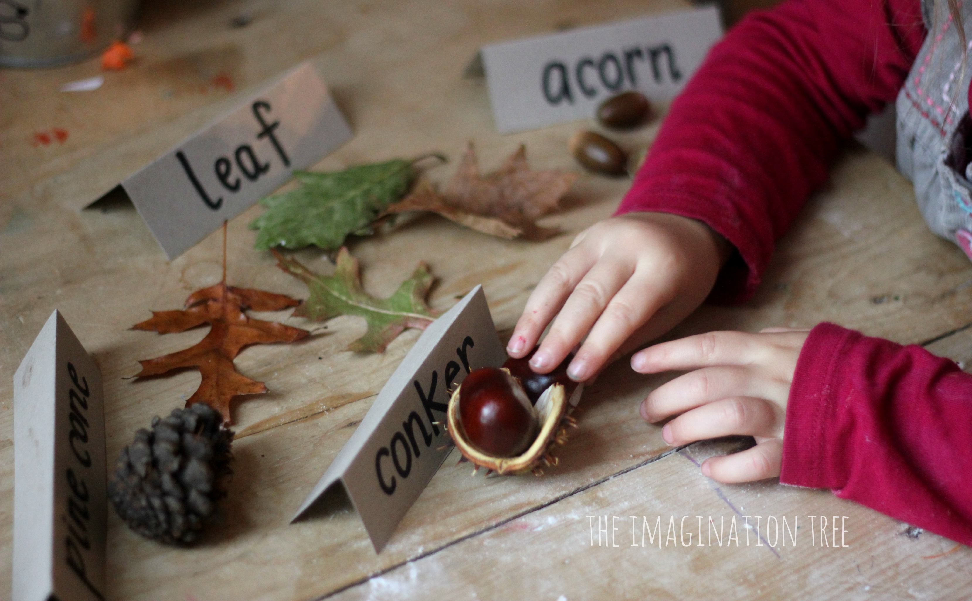 Montessori Language Program  Montessori Curriculum