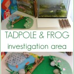 Tadpole and frog investigation and observation area