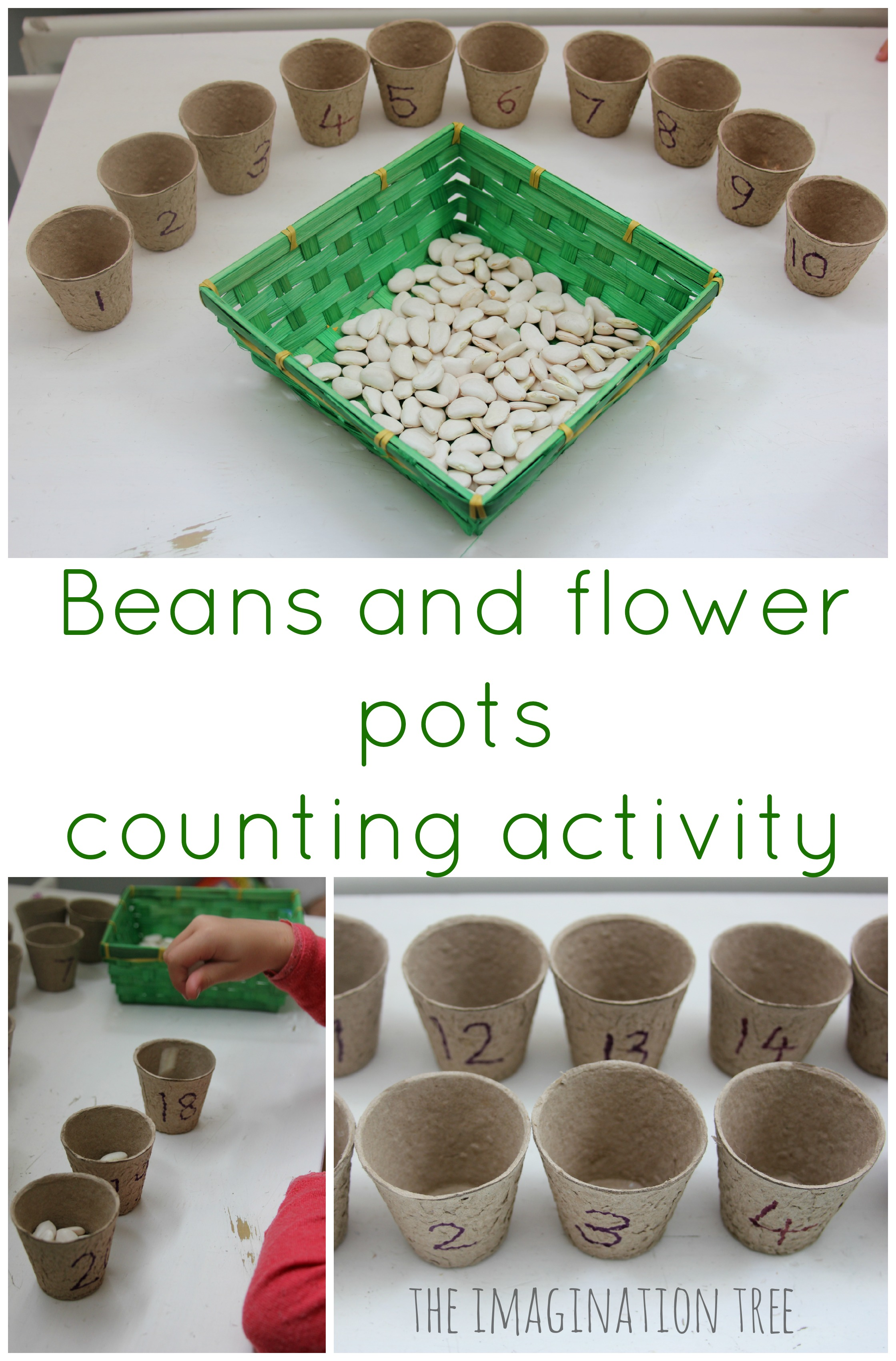 Beans And Flower Pots Counting Activity The Imagination Tree