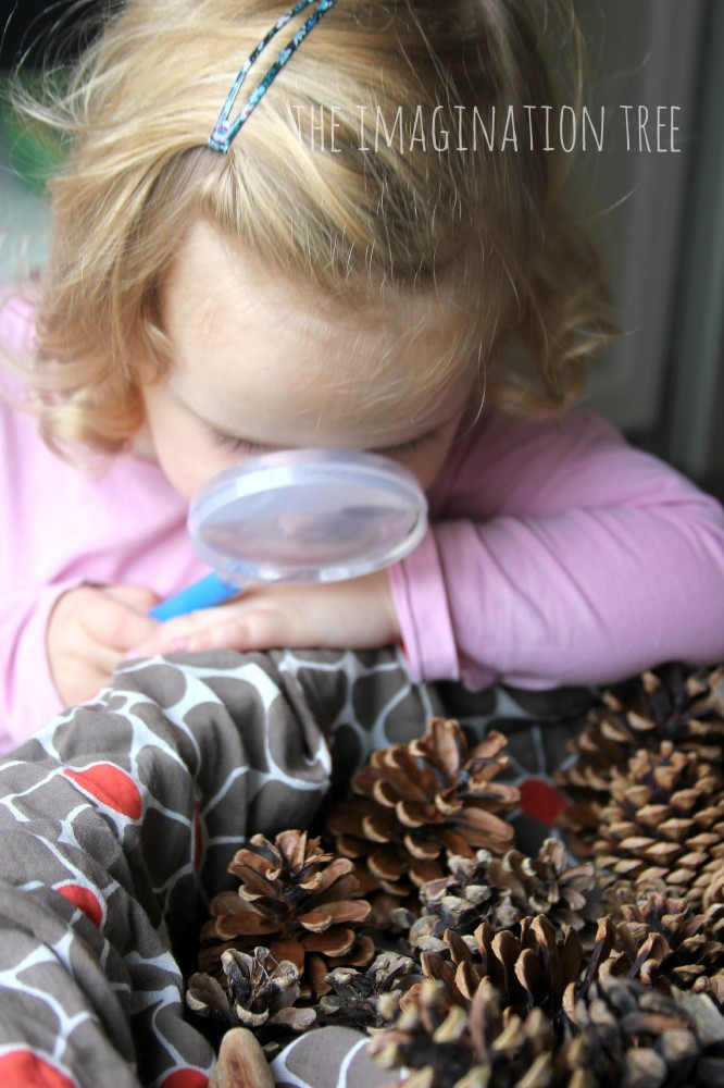 Pine cones and magnifying glasses at the autumn discovery table