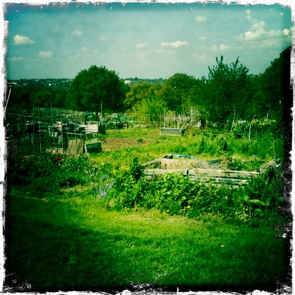 At Pampa's Allotment