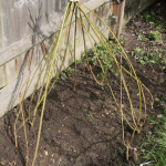Building A Willow Den