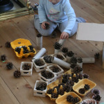 Discovery Box 11: Pine Cones
