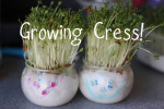 Growing Cress Heads and Cress Initials!