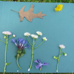 Art and Play in Nature: It's Playtime!