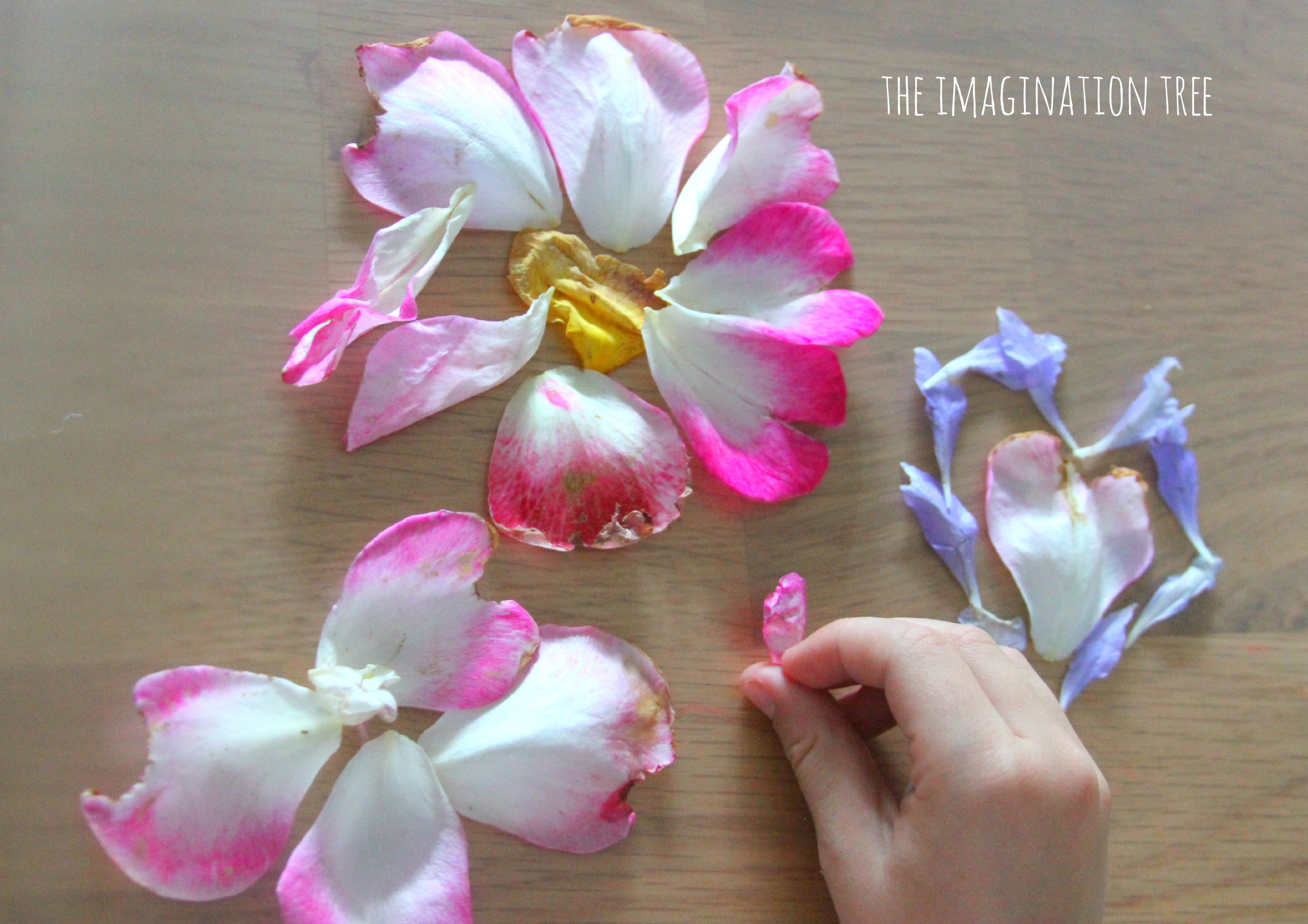 Laminated flowers crown and art the imagination tree flower petals crown izmirmasajfo