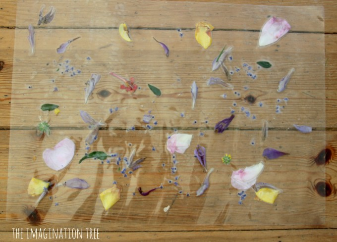 Laminated flowers, leaves and petals