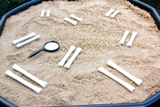 Dinosaur bones match and measure set by The Imagination Tree