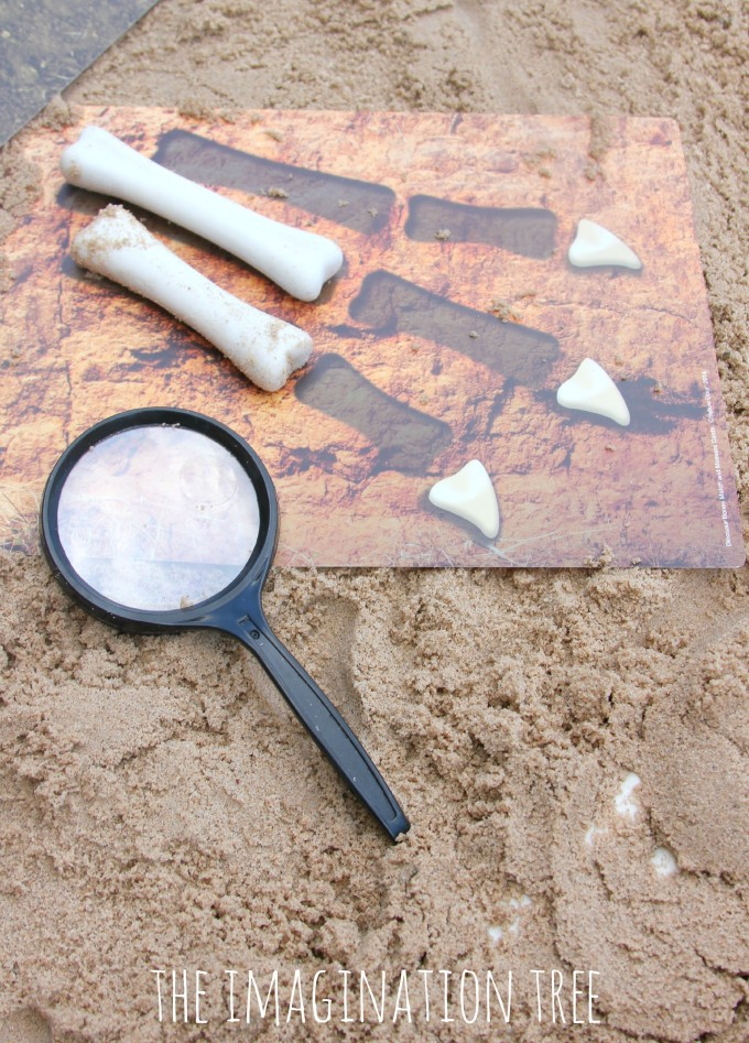 Dinosaur bones matching, measuring and ordering set