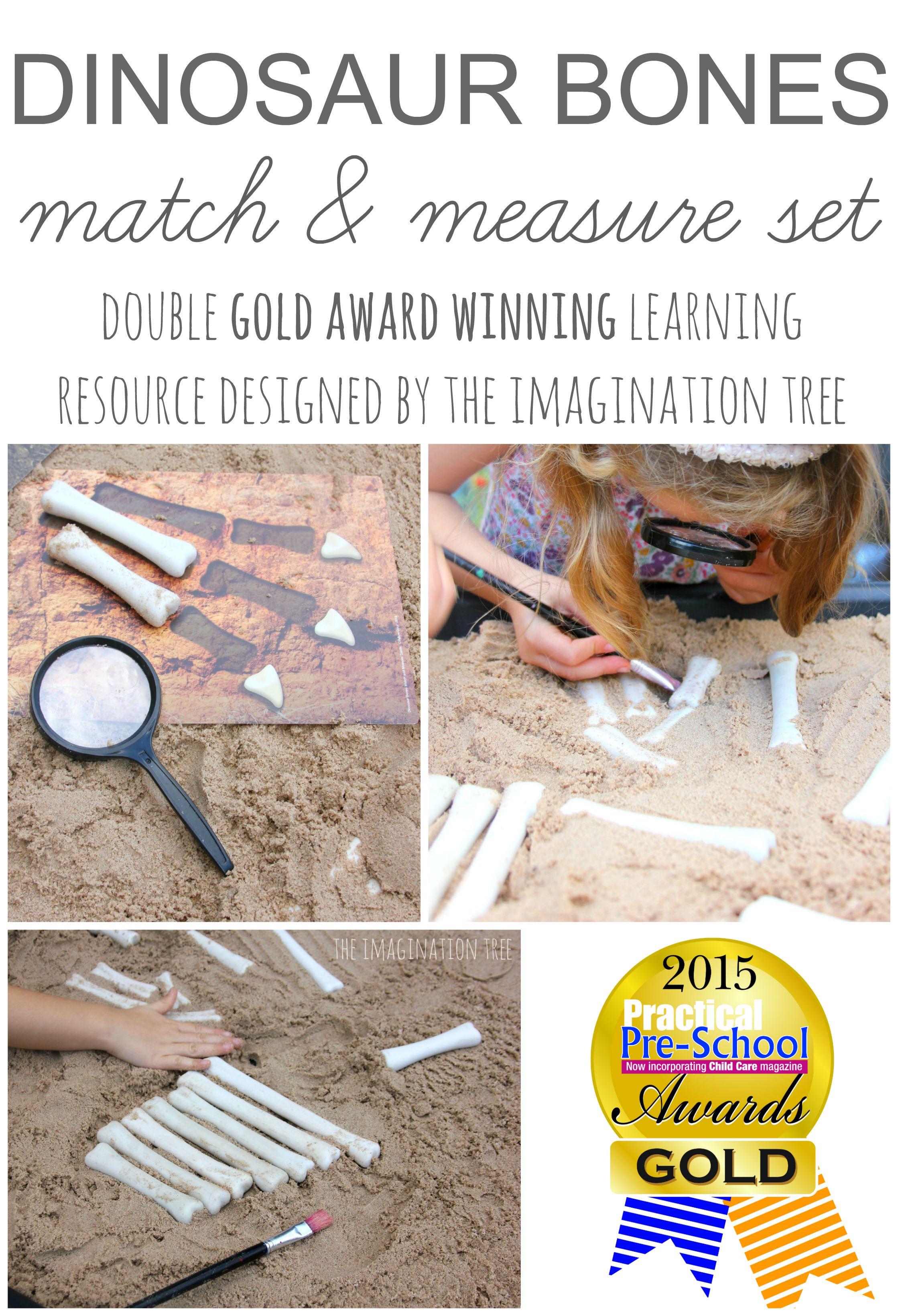 Dinosaur Bones Match And Measure Set The Imagination Tree