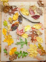 Autumn Leaf Collage