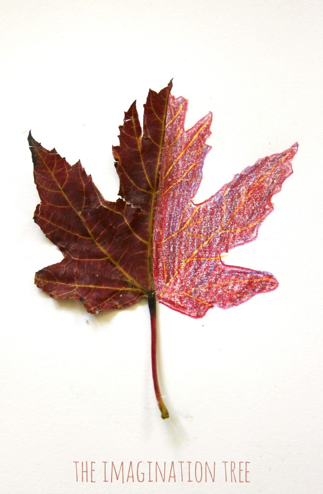 Mirror Leaf Drawings: Nature Art
