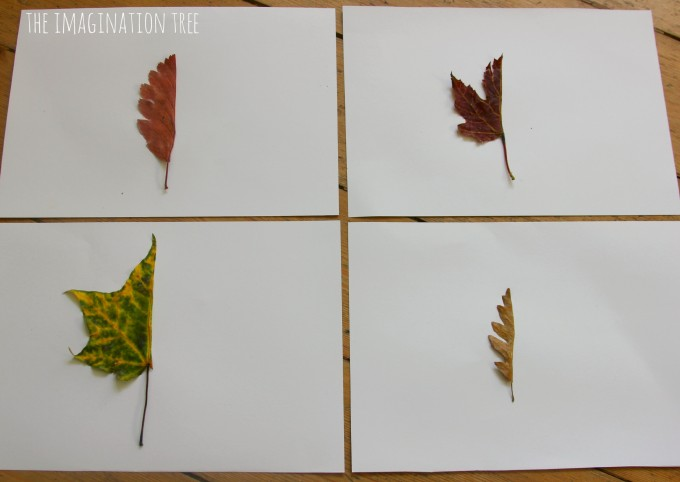 Leaf drawing art activity for kids