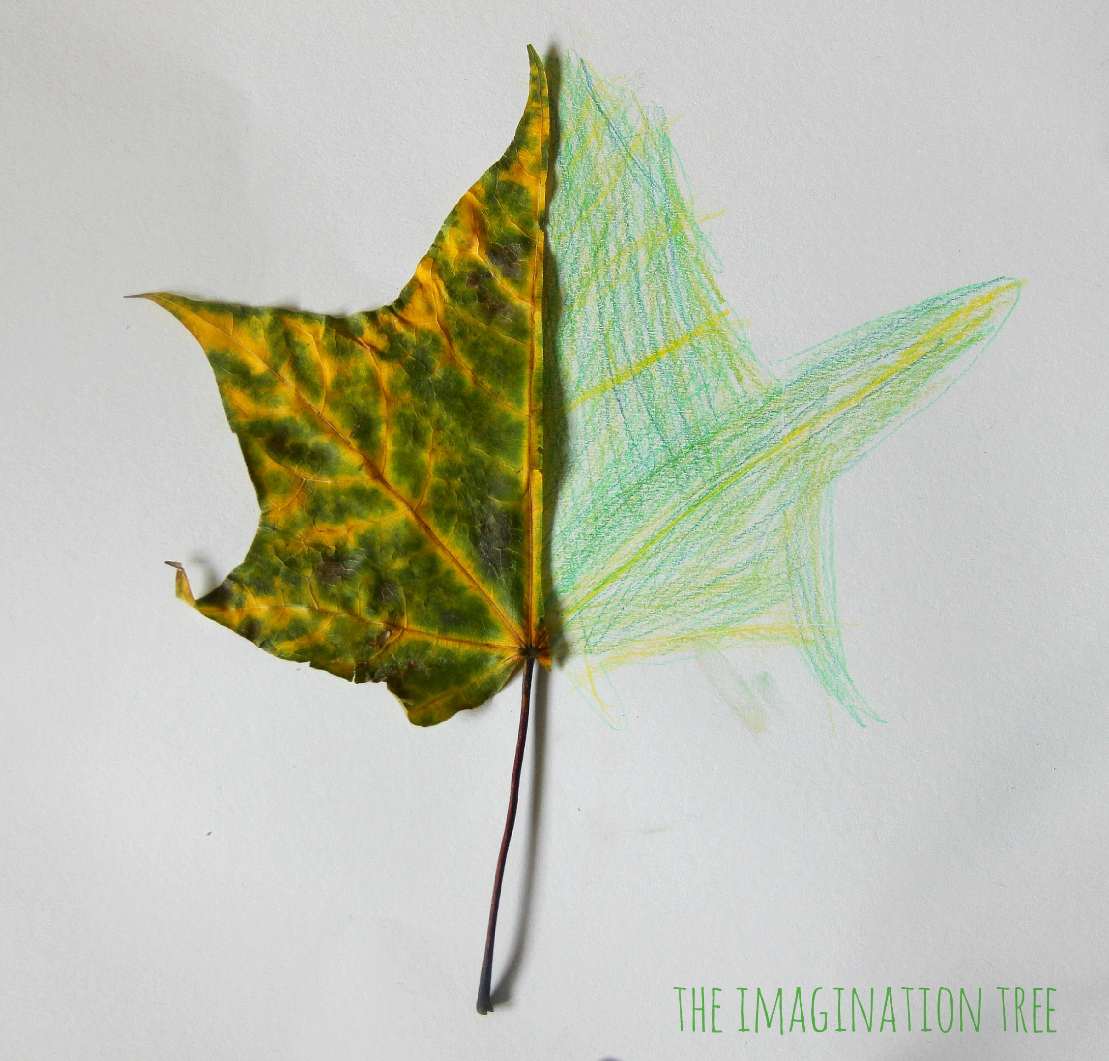 Drawing half leaf mirror pictures a nature art activity for kids