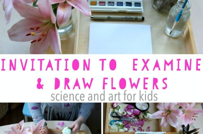 Invitation to examine and draw flowers for kids