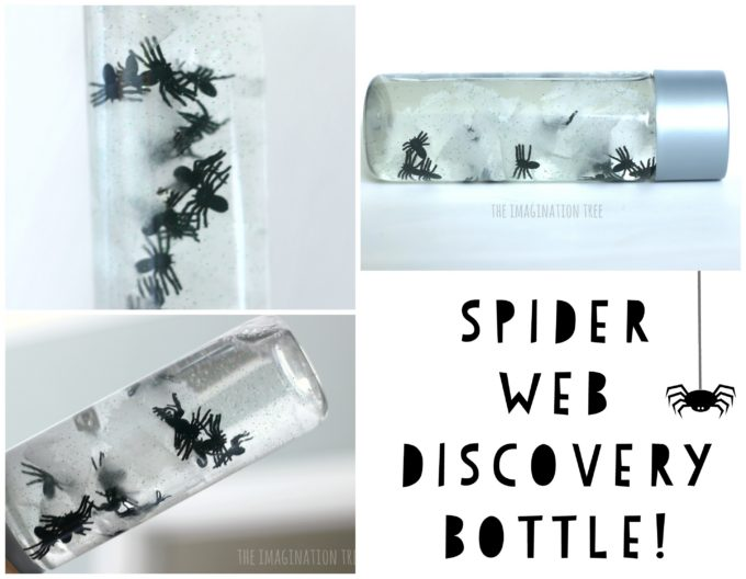 Spider Web Discovery Bottle